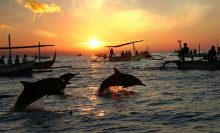 Dolphin Tours – sunrise at Lovina